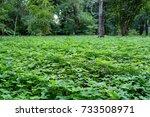 green little plants cover all... | Shutterstock . vector #733508971