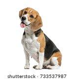 Dog  Beagle Sitting And Pantin...