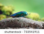 beetles   insects   bugs  ...   Shutterstock . vector #733541911