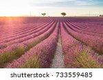 big lavender field on sunset in ...   Shutterstock . vector #733559485