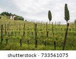 walk through woods and vineyards | Shutterstock . vector #733561075