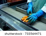 worker hands packing carrots... | Shutterstock . vector #733564471