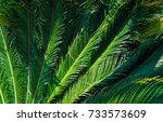 palm leaves green background | Shutterstock . vector #733573609