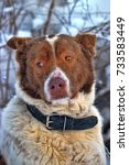 Small photo of Dog old snow winter cold weather senility sad abandoned