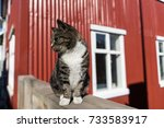 cat against red house on the... | Shutterstock . vector #733583917