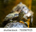 ed eared slider  also known as... | Shutterstock . vector #733587925