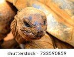 the aldabra giant tortoise ... | Shutterstock . vector #733590859
