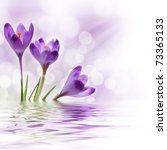 Three Crocus Flowers Against...