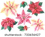 christmas set of flowers... | Shutterstock . vector #733656427