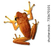 tropical yellow frog   isolated ... | Shutterstock . vector #733670101