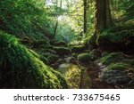 fairy forest  a green stream in ... | Shutterstock . vector #733675465