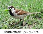 sparrow  front view of a bird... | Shutterstock . vector #733713775