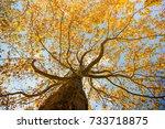 autumn tree background | Shutterstock . vector #733718875