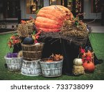 Giant Pumpkin Surrounded By...