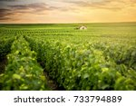 champagne vineyards at sunset ... | Shutterstock . vector #733794889