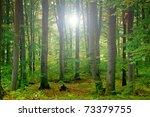 green forest | Shutterstock . vector #73379755