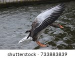 Goose Landing With Inverted...