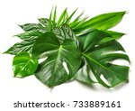 various tropical leaves... | Shutterstock . vector #733889161