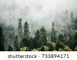 beautiful misty forest morning... | Shutterstock . vector #733894171