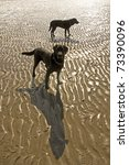 Dog And Patterns In The Sand A...