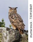 Eagle Owl On High. An...