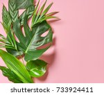 various tropical leaves on a... | Shutterstock . vector #733924411