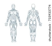 muscles in the body  vector.... | Shutterstock .eps vector #733933774