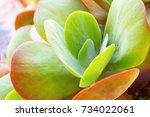 one fresh succulent cactus... | Shutterstock . vector #734022061