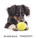 dog with ball isolated on a... | Shutterstock . vector #734024557