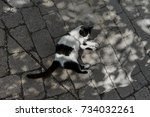 Cat Lying On Brick Shaped ...