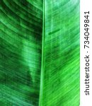 green leaves background. close... | Shutterstock . vector #734049841