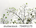 the tree on white background | Shutterstock . vector #734091175
