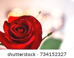 Stock photo background bud of red rose red rose 734152327