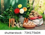 garden flowers and vegetables