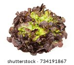 red oak leaf lettuce front view ... | Shutterstock . vector #734191867