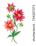 red dahlias  watercolor drawing ... | Shutterstock . vector #734207371