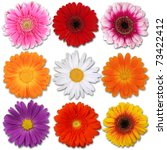 Colored Blooms Isolated On White