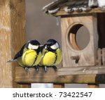 A Pair Of Great Tit Birds...