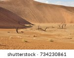 namib desert.  dead  dry wood