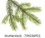 Branch Of Christmas Tree...