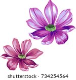 vector daisies  isolated... | Shutterstock .eps vector #734254564