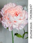 pink peony background  very... | Shutterstock . vector #734286247