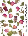 Stock photo rose leafs and flowers isolated white background 734342461