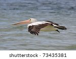 pelican in flight | Shutterstock . vector #73435381