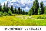 hiking through alpine meadows... | Shutterstock . vector #734361685