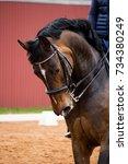 portrait of dressage horse in... | Shutterstock . vector #734380249