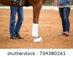 close up of horse legs in the... | Shutterstock . vector #734380261