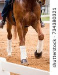 close up of horse legs in the... | Shutterstock . vector #734380321