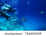 Small photo of Fish swim for diving. Abudefduf saxatilis
