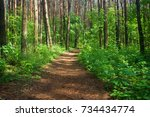 path in the dense summer forest | Shutterstock . vector #734434774